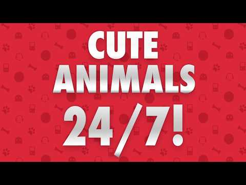 We're Now On Twitch! Funny Animal Videos 24/7
