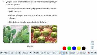 Eğitim Vadisi 9.Sınıf Biyoloji 15.Föy Protistler, Bitkiler ve Mantarlar Konu Anlatım Videoları