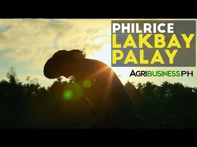 Rice-production-philrice-lakbay-palay