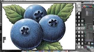 Scratchboard Illustration of Blueberries for Food Package Label