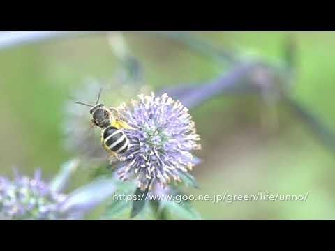 庭のバタフライガーデンのハチの飛翔