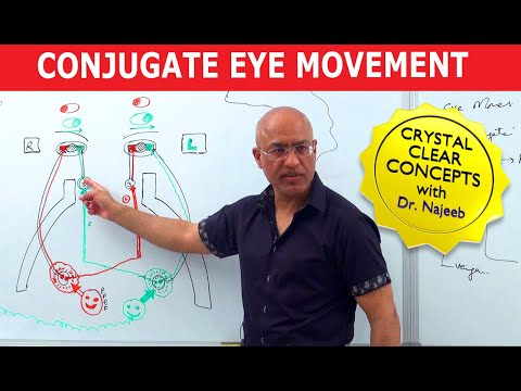 Saccades – Conjugate Eye Movement