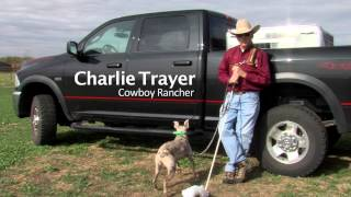How To Train & Handle The Cowdog -DVD FOR SALE