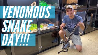 Cleaning Venomous Snakes!