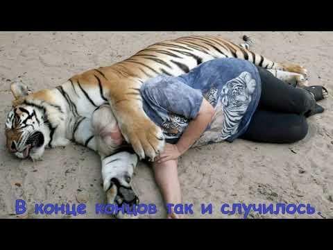 ТЫ НЕ ПОВЕРИШЬ!.Но.....тигрицу людоеда застрелили 2 ноября