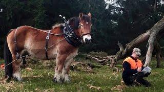 Pferdestärken   Die Arbeitspferde Aus Dem Wendland [Doku HD]