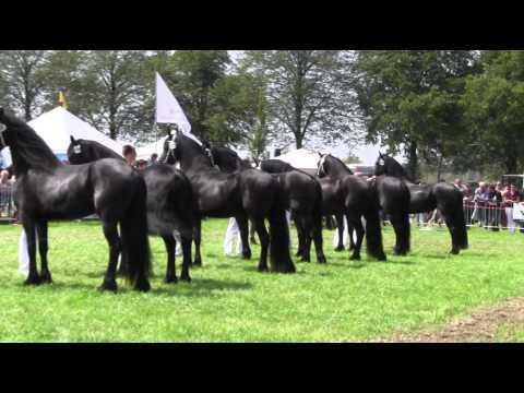 סוסי הפרייסיאן המדהימים