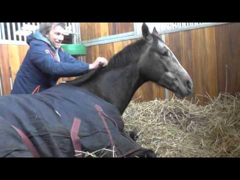 Come usare il prodotto sul cavallo