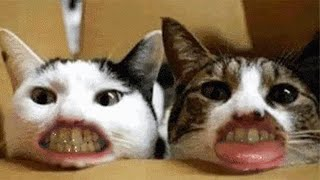 Funny 😹 Cats And 🐶 Dogs Situations - Try Not To Laugh 😂