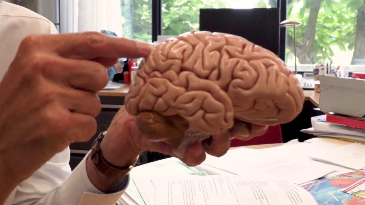 Erik Scherder over Dammen en het Fitte Brein