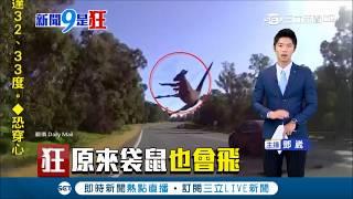 澳洲袋鼠好身手!突竄出險撞車 一個Move展輕功飛越公路|【萌寵54來當家】20180924|三立新聞台 | Kholo.pk
