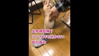 痛み止めの効かない坐骨神経痛の足の痛みの意外な原因と治療方法