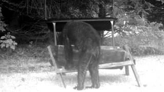 Bigfoot Caught On Pennsylvania Trail Cam?
