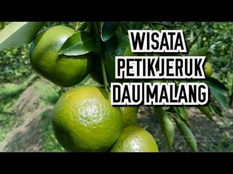 Jahe dengan madu dan lemon resep untuk potensi peningkatan
