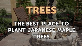 The Best Place to Plant Japanese Maple Trees