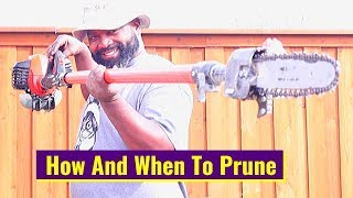 How And When To Prune Oak Tree