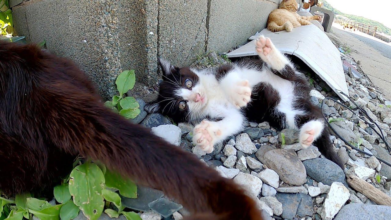 ママ猫の尻尾で無邪気に遊ぶハチワレ子猫が可愛すぎる