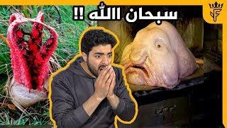 ابشع مخلوق في العالم   سبحان الله !!!
