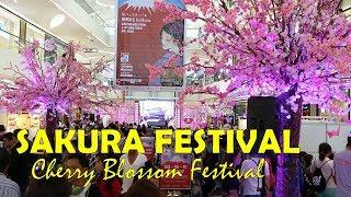 Sakura Festival|Cherry Blossom Festival|Sakura Matsuri, SM Seaside City Cebu, Philippines