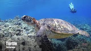 Conheça o nosso trabalho - Aloha Divers Okinawa