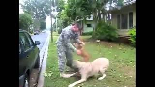 Вижте КОЛКО е силна ЛЮБОВТА между животни и хора!