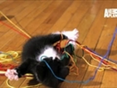 Loving Kittens Playing In Super-Slow Motion Is A Cute Overload