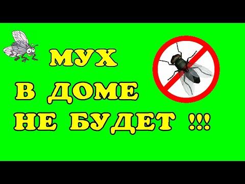 Прогнать мух из дома просто.