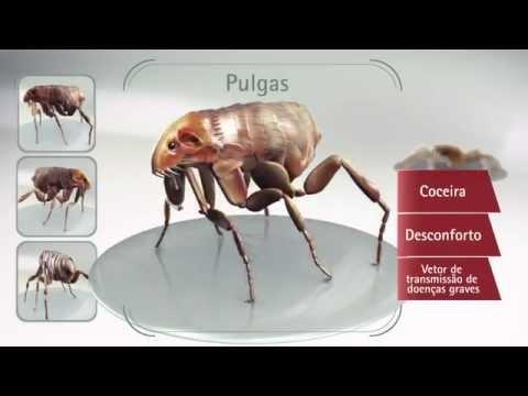 Sóska kezelés a paraziták számára