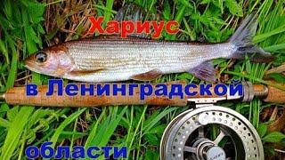 Нахлыст в ленинградской области где ловить