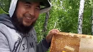 Чистим рамки  Качаем первый мед. Мёд Исмаил. Пасека 2019.