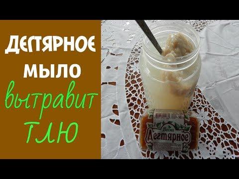 Ichtiolowaja hilft die Salbe von gribka