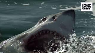 Лайфхак для защиты от Нападение Акулы. Топ лайфхаки lifehack