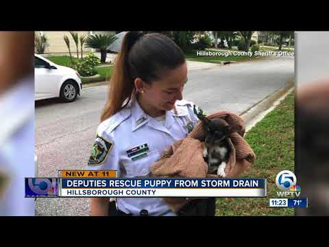 Puppy rescued from Florida storm drain