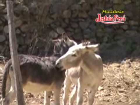Burro Gay Video