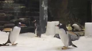 Penguin at Sydney