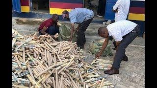 Bhang worth Sh800,000 seized in Kilifi - VIDEO