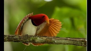 Most Exotic Bird Species - Wildlife Rainforest | Beautiful Birds & Colorful Birds