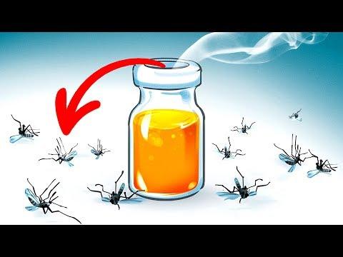 15 Maneiras naturais de se livrar dos mosquitos no quintal