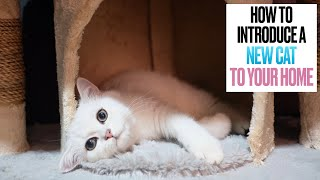 How to Introduce a New Cat to Your Home