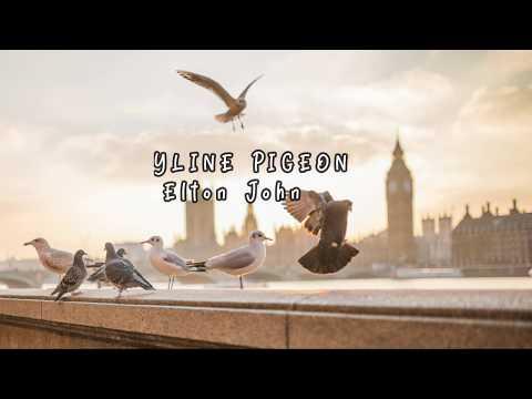 Skyline Pigeon Lyrics (Elton John)