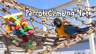 Parrot Climbing Nets! These are Huge!