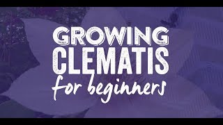 How to grow a Clematis