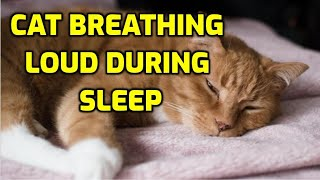 Cat Breathing Heavily While Resting? (5 Reasons Why!)