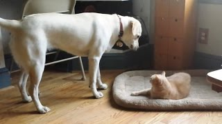 Cats Stealing Dog Beds 2015 [NEW]
