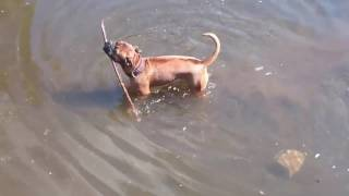 Funny Compilation Of Dogs Playing In Water - Animal Humor