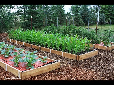 How to Build Raised Beds: Everyone Can Grow A Garden (2019) #8