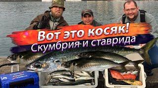 Ловля скумбрии в черном море