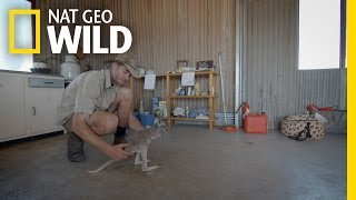 Kangaroo Potty Training | Kangaroo Dundee
