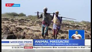 At least 100 camels die in Marsabit County