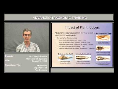 The regulatory importance of planthoppers